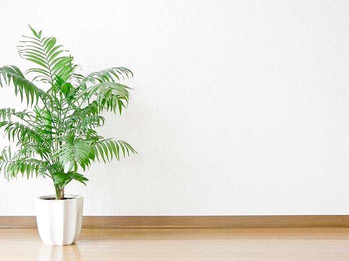 清潔な空間の中にある観葉植物